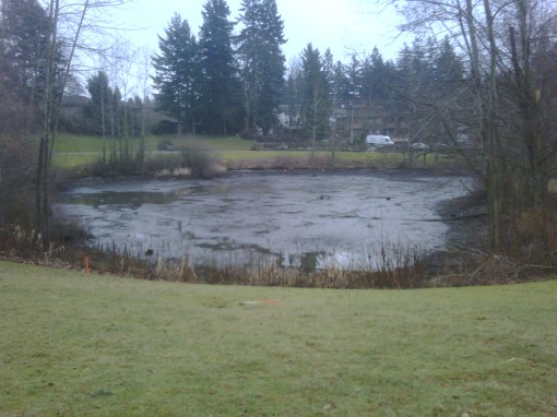 Drained duck pond