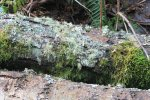 A garden of mosses, lichens and what-not