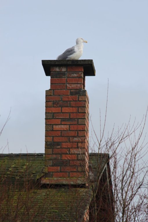 Seagull: house-sitting