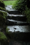 I loved the way these steps were reflecting the moody feel of this damp corner of the gardens.
