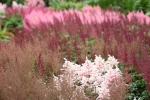 Astilbes in every shade of pink from white to crimson. Almost like a Monet: lots of little dots of colour