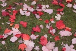 It was wet and cold, but freshly fallen leaves seem so much alive with hope still.