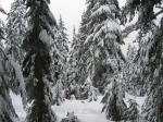 Seymour: I love the way the snow hangs on to the trees