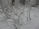 Seymour: Delicate branches looked like coral