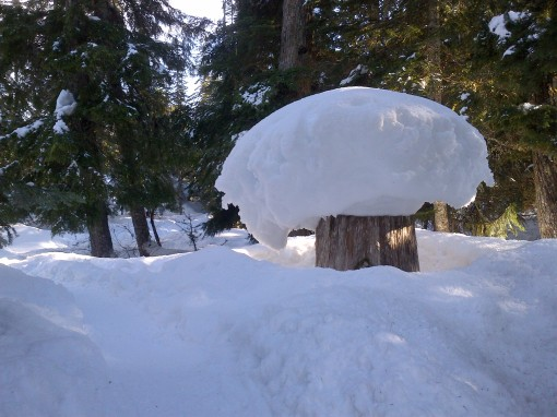 Callaghan Valley: Now that's a mushroom!