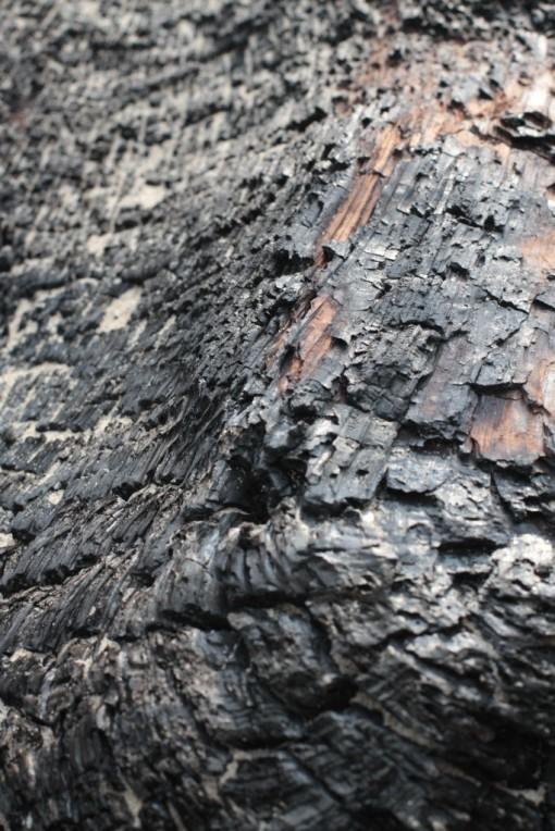A charred log on the beach