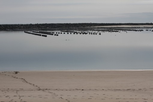 Oyster bed at Winchester Bay, Oregon